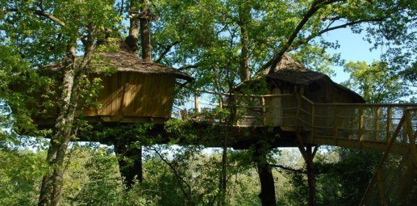 tree-houses-alicourts